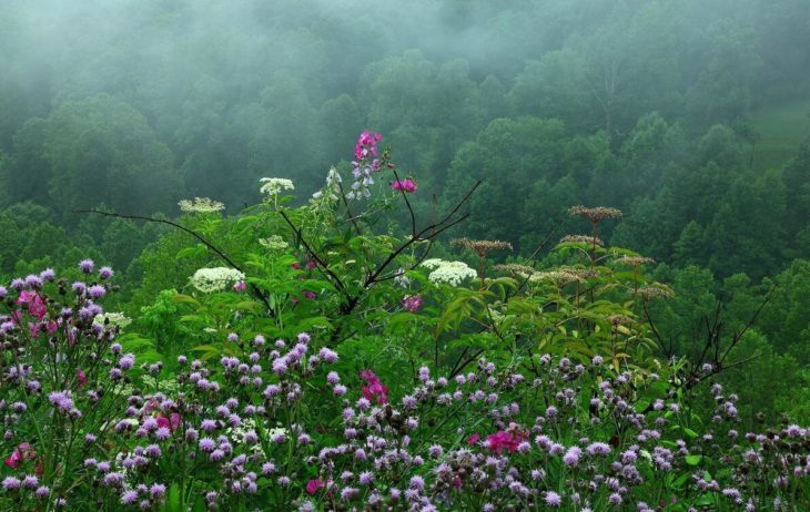 The flora in Japan is very species rich
