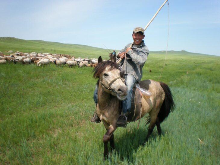 Shepherd in the Selenge Aimag