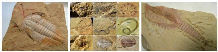 Chengjiang Fossil Site
